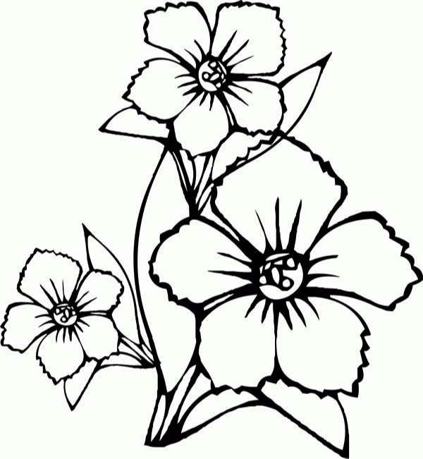How to Draw Flower Coloring Page | Kids Play Color