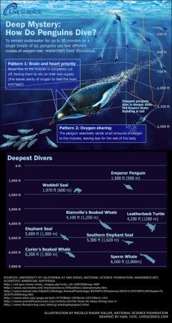 Into the Blue: The Ocean's Deepest Divers (Infographic)
