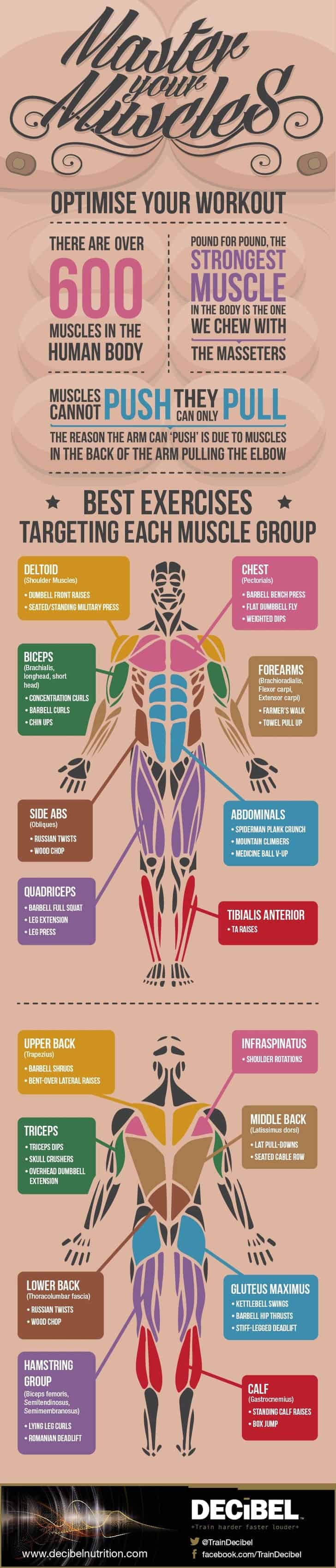 Master Your Muscles: How To Optimise Your Workout – Imgur