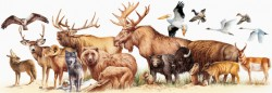 Animals size comparisons – Mary Donahue