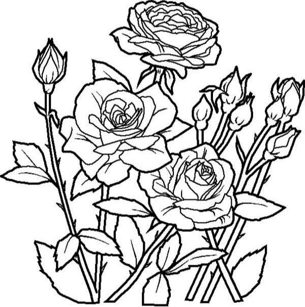 Rose Flower in the Garden Coloring Page | Kids Play Color ...