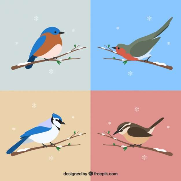 Set of beautiful birds of snowy branches
