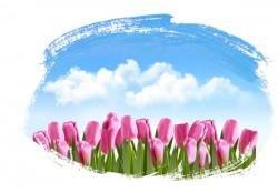 Tulip flowers vector pictures