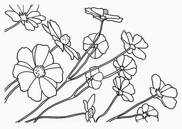 Wild Flower Coloring Page | Kids Play Color