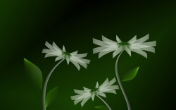 3D Flowers Wallpapers – 1440×900 – 161050