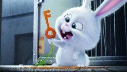 The secret life of pets, 2016, Rabbit, Snowball laptop 1366×768 HD Background