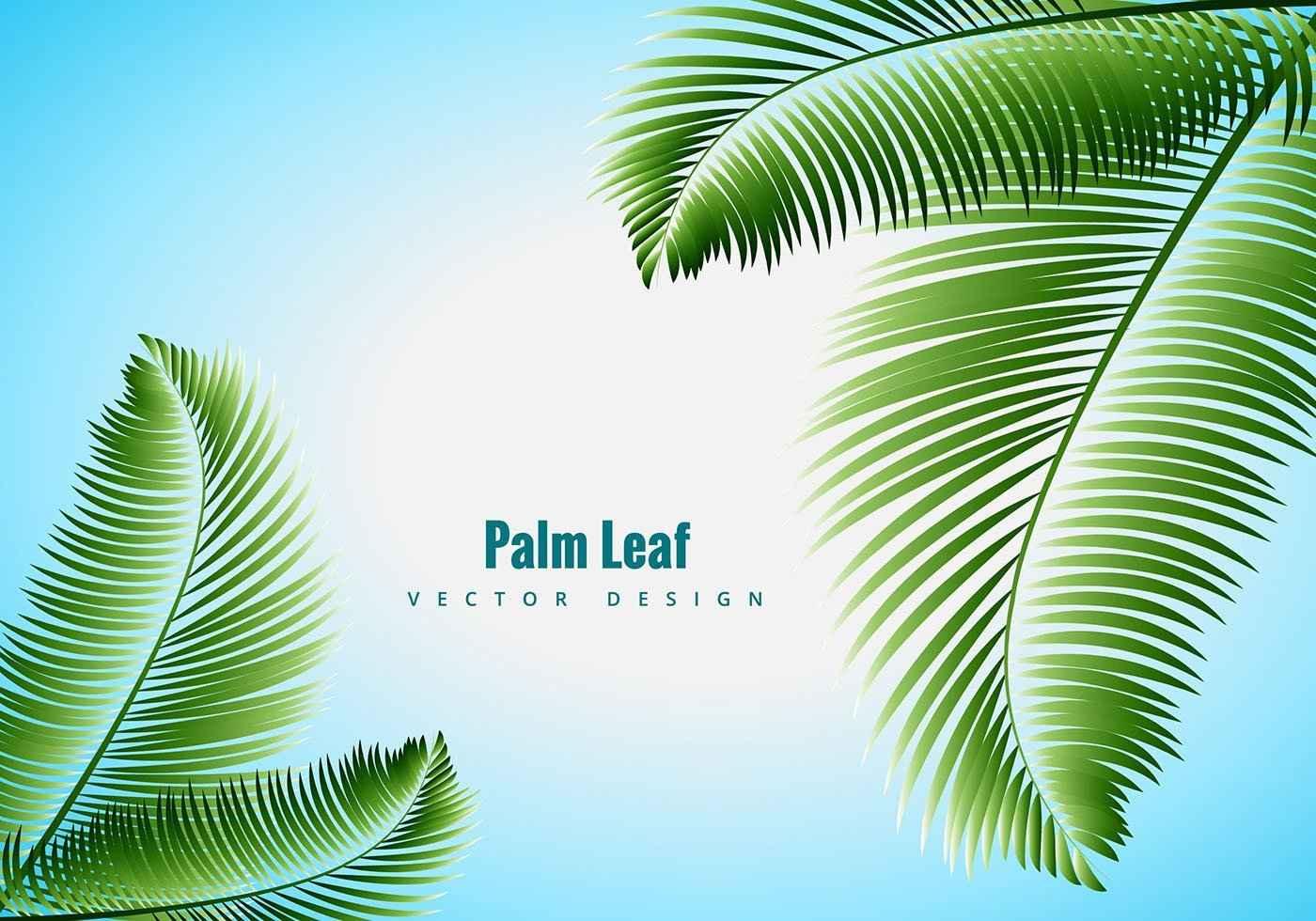 Palm Leaf Vector Vector