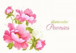 Pink Watercolor Peonies Vector