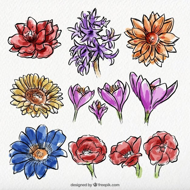 Set of wild hand-drawn watercolor flowers