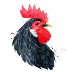 Black rooster head vector