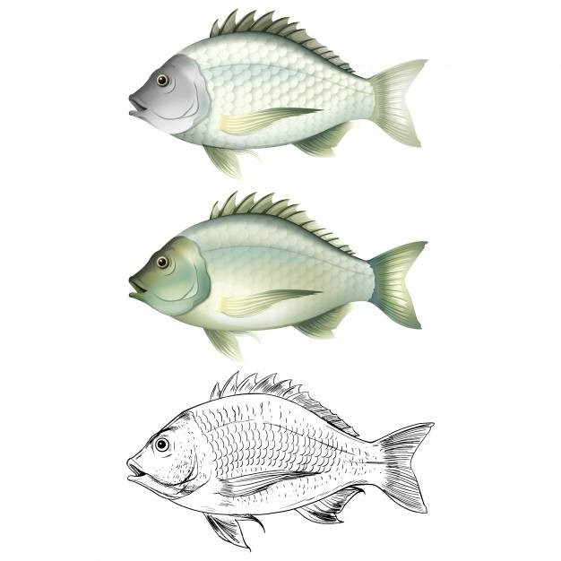 Fish designs collection