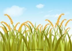 Free Vector Rice Field Illustration