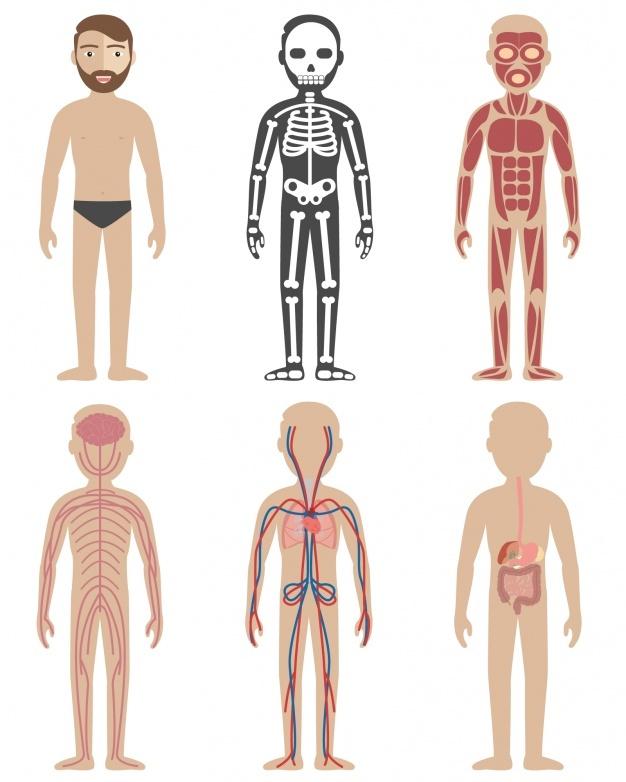 Human anatomy designs