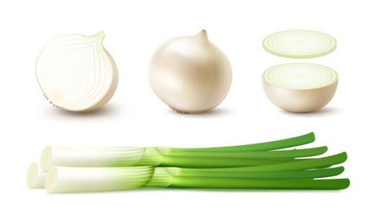 Onion slice with gree vagetables vector 01