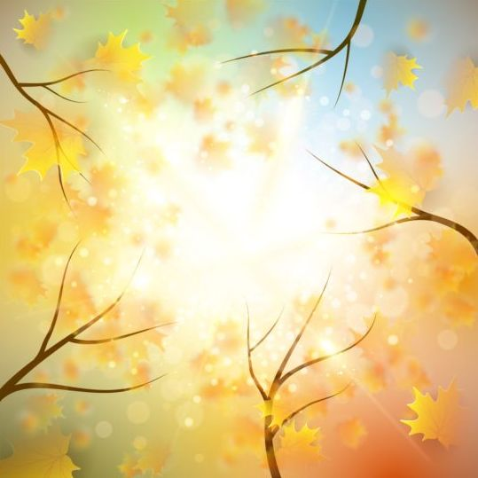 Tree leaves with sunlight autumn background vector