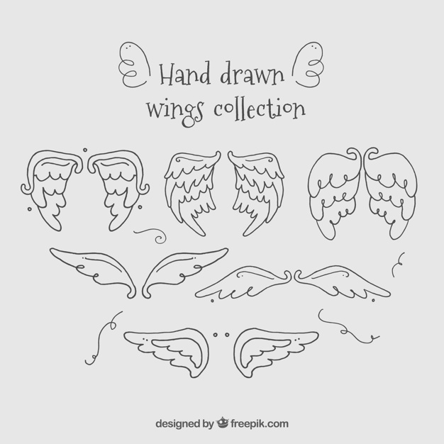 Hand drawn wings collection