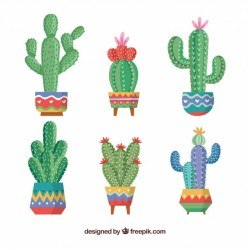 Creative cactus collection
