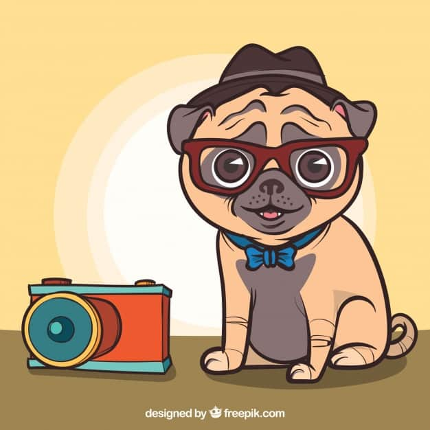 Lovely pug with photographer style