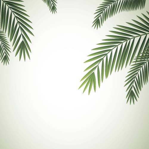 Green palm leaves backgrounds vector 06