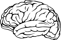 Brain Profile Line Art Icons PNG