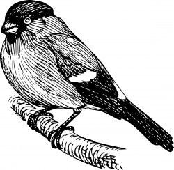 bullfinch Icons PNG