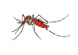 cartoon mosquito spreading Aedes aegypti Icons PNG