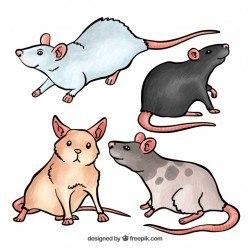 Cute mice set