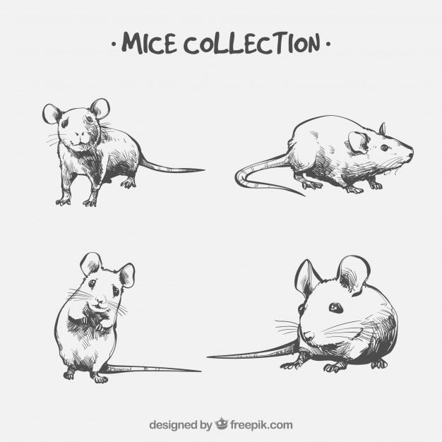 Hand drawn mice collection