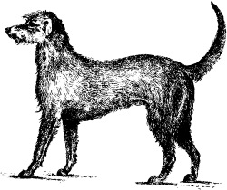 Irish wolfhound Icons PNG