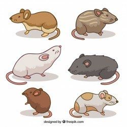 Pack of different mice breeds