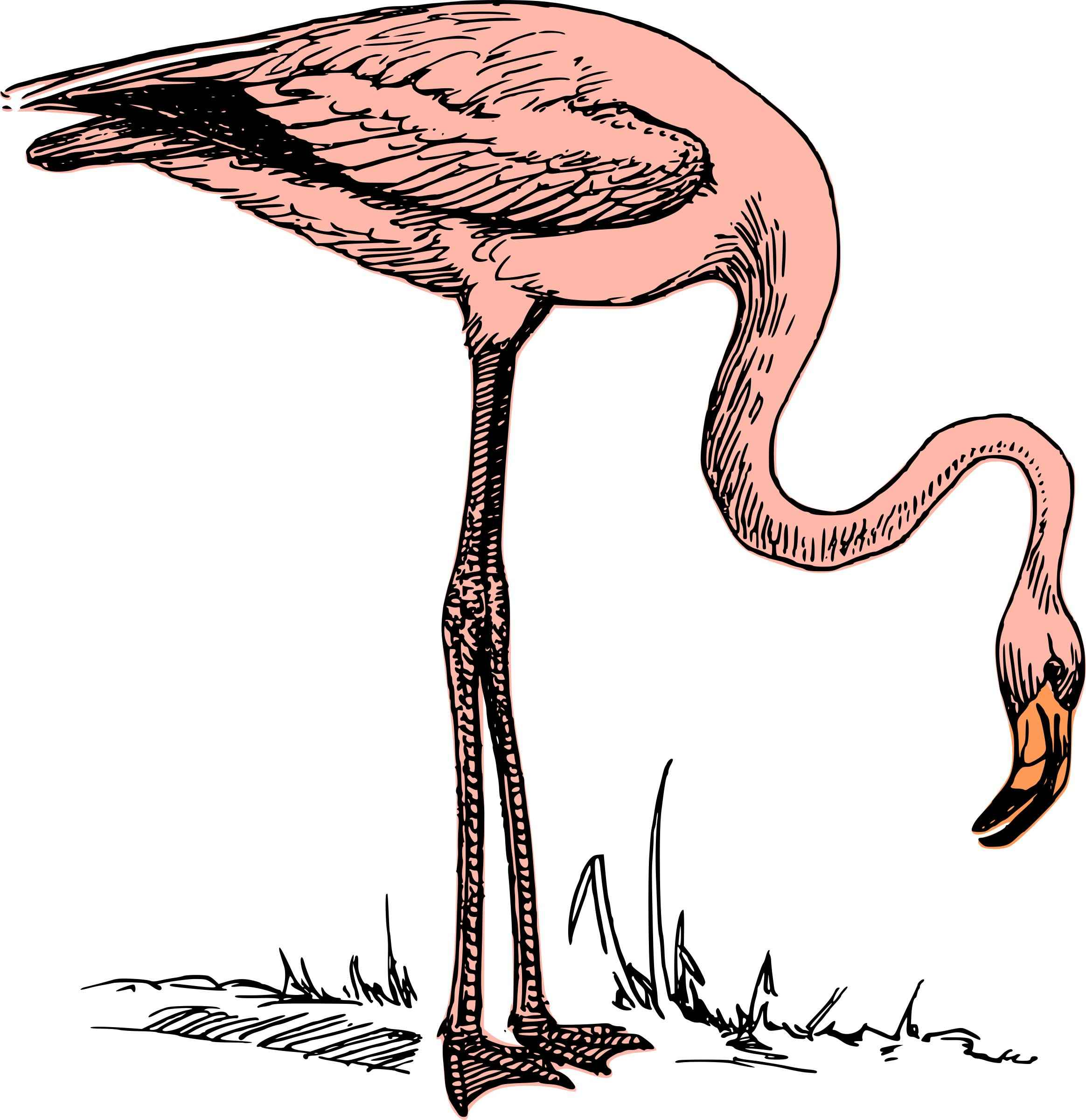 Pink flamingo Icons PNG