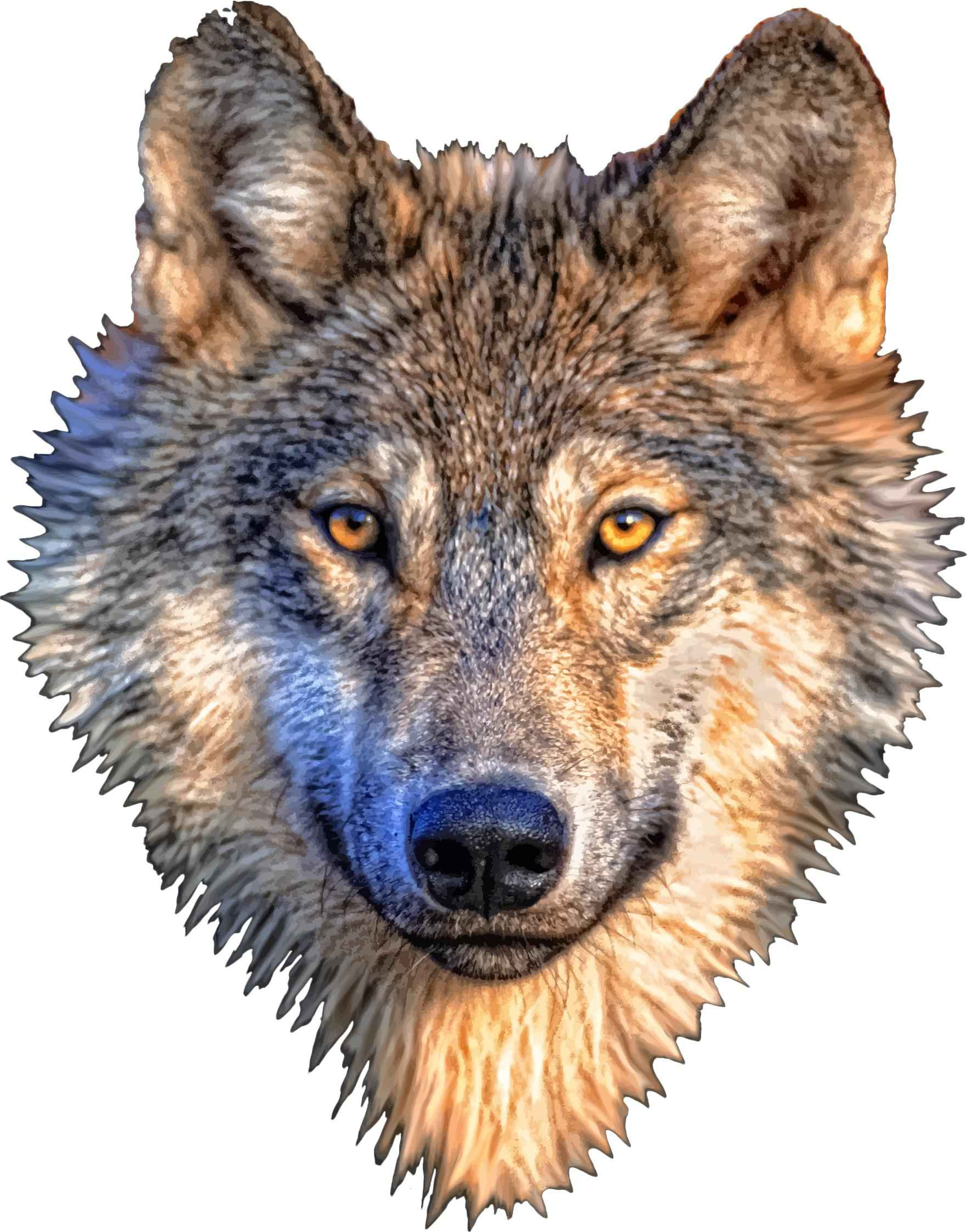 Wolf Head Icons PNG