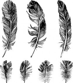 Hand drawn black feather vectors 01