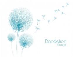 Dandelion flower illustration vector