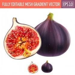 Pomegranate realistic vectors