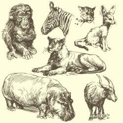 Hand drawing wild animal vector set 09