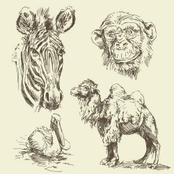 Hand drawing wild animal vector set 03
