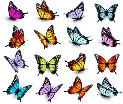 Set of colorful butterflies vector material 03