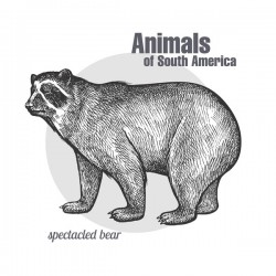 Animals of South America Spectacled Bear