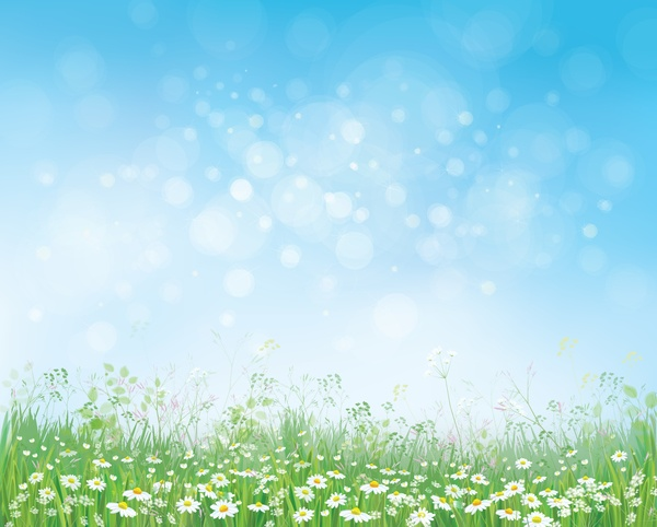 White daisies with spring backgrounds vector set 13