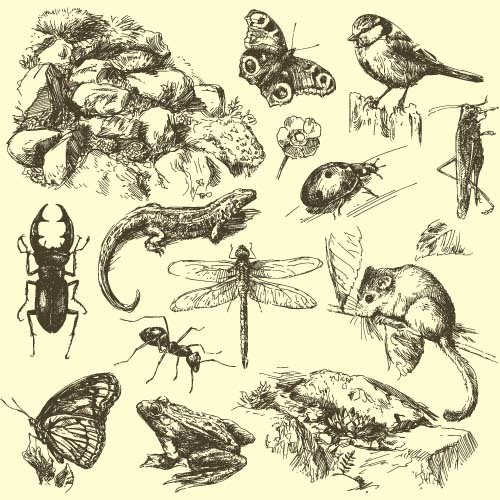 insect with small animals hand drawn vector