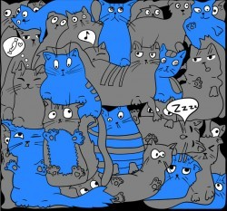 Gray and blue cats on black
