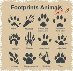 Animal footprints design set vector 01