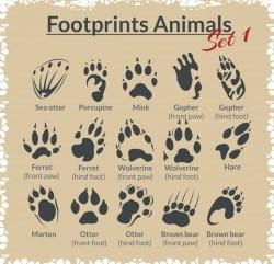 Animal footprints design set vector 04