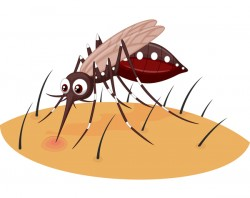 funny mosquito cartoon vector material 08