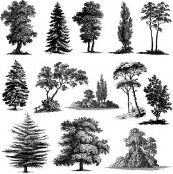 Various tree silhouette vectors set 02