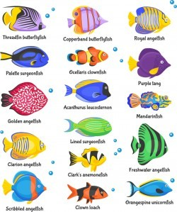 Beautiful tropical fish vector set 01