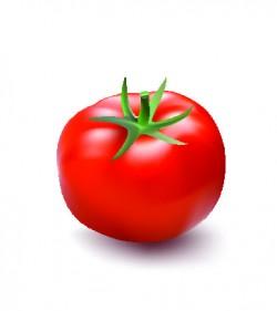 Fresh tomato illustration design vector 02