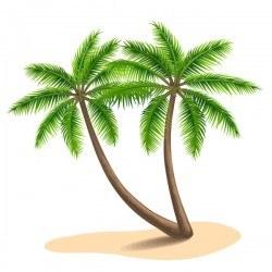 Realistic palm tree illustration vectors 11