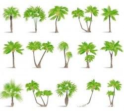 tropical tree illustration vector 03